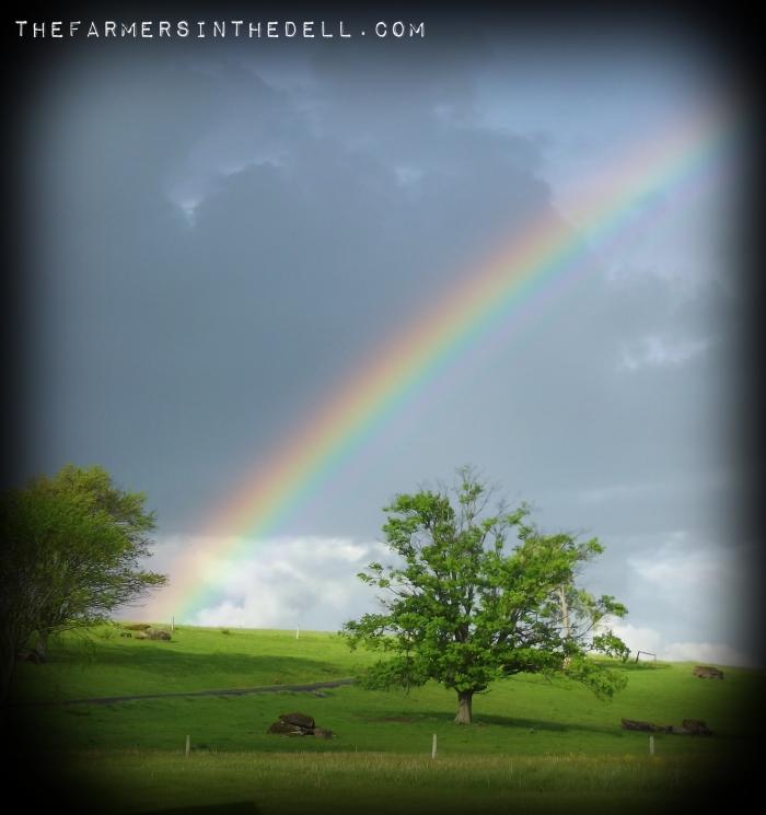 morning rainbow - TheFarmersInTheDell.com