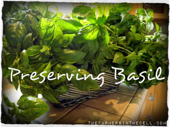 preserving basil - TheFarmersInTheDell.com