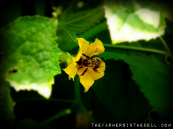 bumble bee - The FarmersInTheDell.com