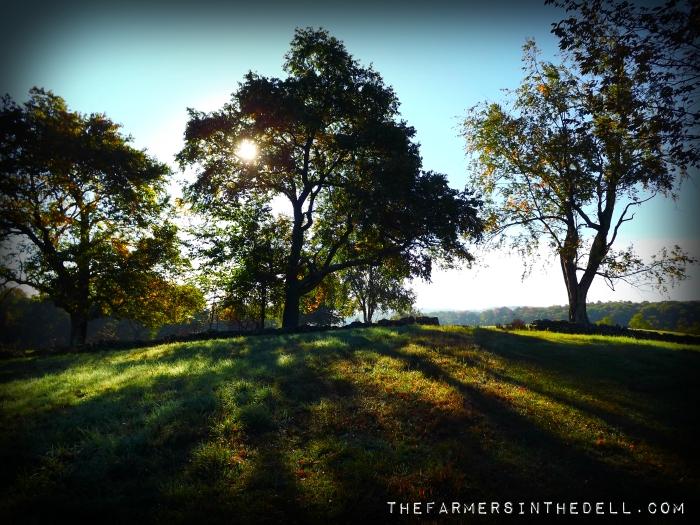 fall morning - TheFamersInTheDell.com