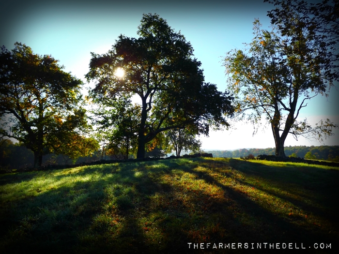 fall morning - TheFamersInTheDell.com