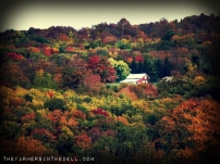 shed barn in autumn - TheFarmersInTheDell.com