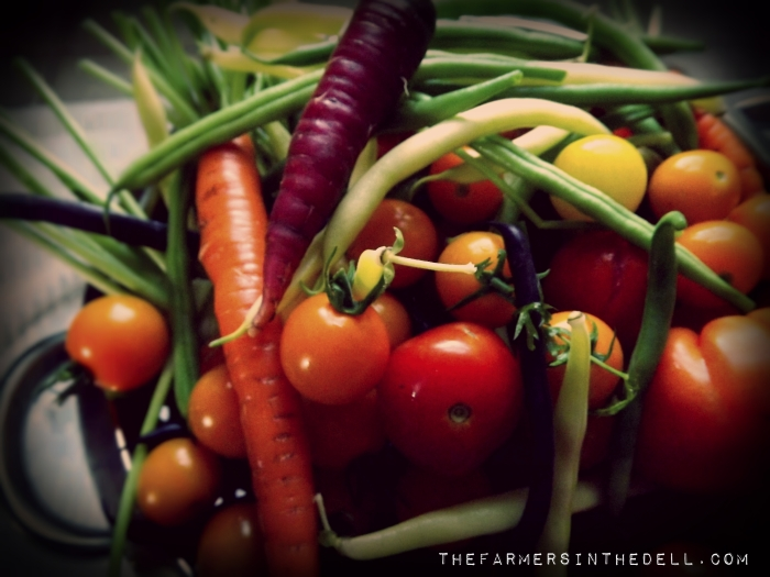 basket of vegetables - TheFarmersInTheDell.com