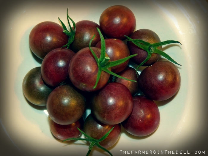 chocolate cherry tomatoes - TheFarmersInTheDell.com