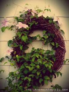 clematis vine - TheFarmersInTheDell.com