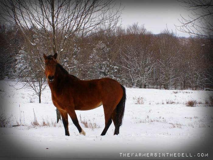 horse in winter - TheFarmersInTheDell.com