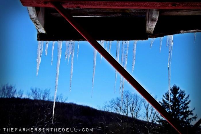winter storm - TheFarmersIntheDell.com