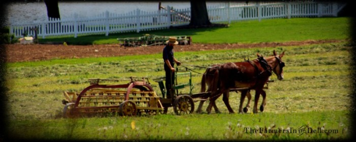 amish, lancaster, pa - TheFarmersInTheDell.com