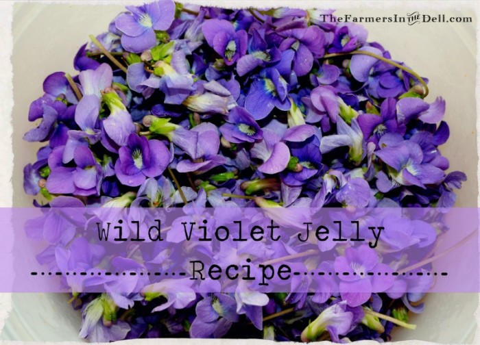 wild violet jelly - TheFarmersInTheDell.com