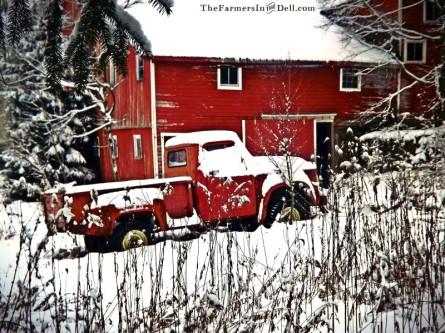 abandoned truck - TheFarmersInTheDell.com
