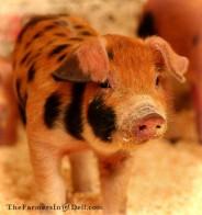 piglet - TheFarmersInTheDell.com