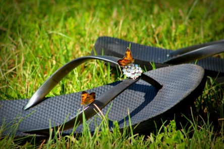 butterflies - TheFarmersInTheDell.com