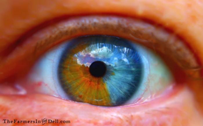 heterochromia iridum - TheFarmersInTheDell.com