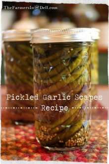 pickled garlic scapes recipe - TheFarmersInTheDell.com