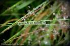 raindrops - TheFarmersInTheDell.com