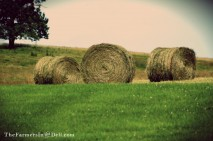 round bales - TheFarmersInTheDell.com