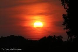 summer sunset - TheFarmersInTheDell.com