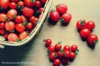 cherry tomatoes - TheFarmersInTheDell.com