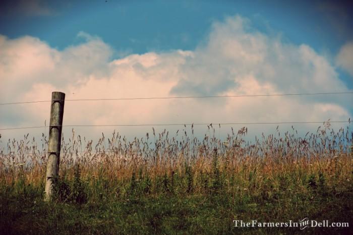 fence post - TheFarmersInTheDell.com