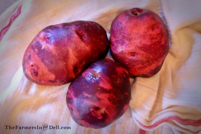 purple viking potatoes - TheFarmersInTheDell.com
