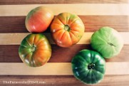ripening tomatoes - TheFarmersInTheDell.com