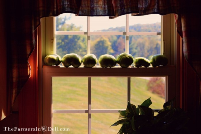 tomatoes in window - TheFarmersInTheDell.com