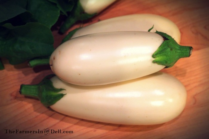 white eggplant - TheFarmersInTheDell.com