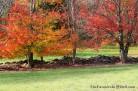 autumn - TheFarmersInTheDell.com