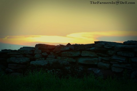 stonewall at dusk - TheFarmersInTheDell.com