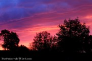 sunrise - TheFarmersInTheDell.com
