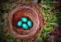 robin's nest - TheFarmersInTheDell.com