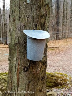 antique maple syrup bucket - TheFarmersInTheDell.com