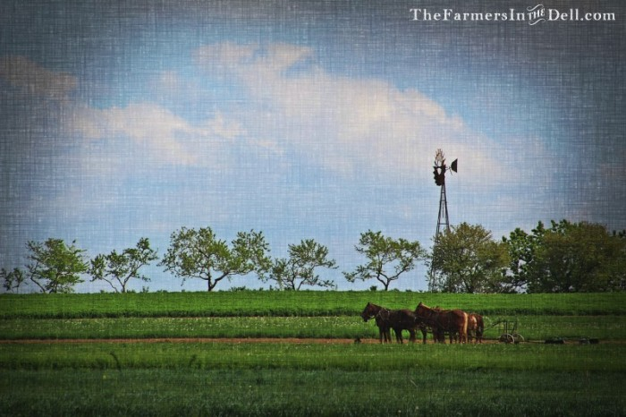 amish lancaster pa - TheFarmersInTheDell.com