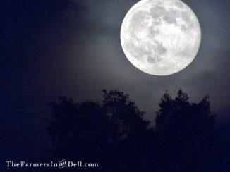 full moon - TheFarmersInTheDell.com