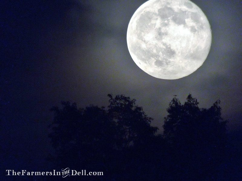 full moon - TheFarmersInTheDell.com
