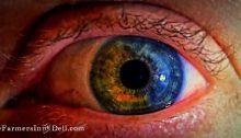 heterchromia iridium - TheFarmersInTheDell.com
