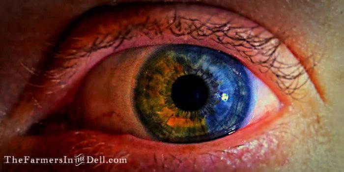 heterchromia iridum - TheFarmersInTheDell.com