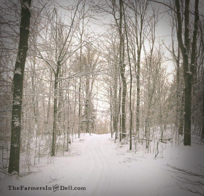 snowy road - TheFarmersInTheDell.com