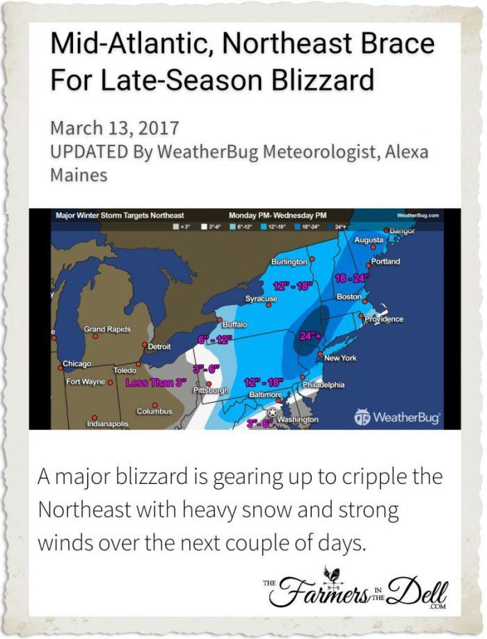 2017 blizzard - TheFarmersInTheDell.com