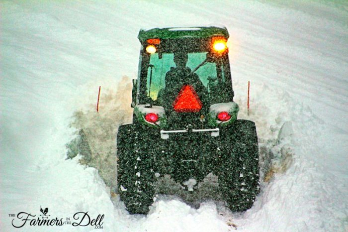 blizzard of 2017 - TheFarmersInTheDell.com