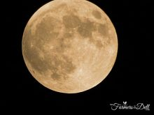 harvest moon - TheFarmersInTheDell.com