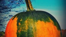 pumpkin - TheFarmersInTheDell.com