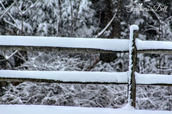 fence in winter - TheFarmersInTheDell.com