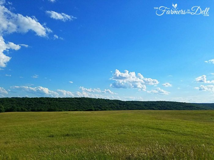 hayfield - TheFarmersInTheDell.com