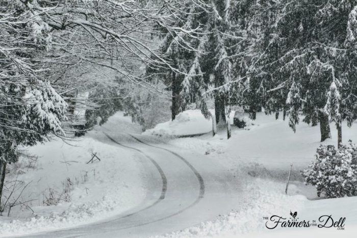 snow covered road - TheFarmersInTheDell.com