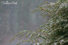 spring snow storm - TheFarmersInTheDell.com