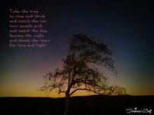 sunset - TheFarmersInTheDell.com